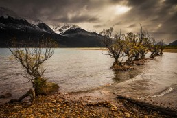 Willow Gold, Glenorchy, NZ - Steve Rutherford Landscape Photography Art Gallery