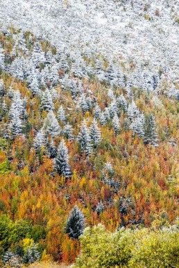 Frosted Forest, Arrowtown, NZ - Steve Rutherford Landscape Photography Art Gallery