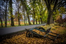 Left Behind, Millbrook, NZ - Steve Rutherford Landscape Photography Art Gallery