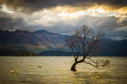 Muse, Wanaka, NZ - Steve Rutherford Landscape Photography Art Gallery
