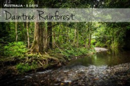 Daintree Rainforest Photography Workshop - Steve Rutherford Landscape Photography Art Gallery