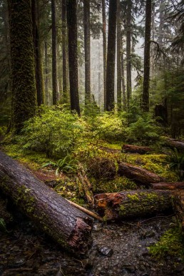 Lost, Sol Duc Forest - Steve Rutherford Landscape Photography Art Gallery