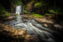 Cascading Life, Ridgley, Tasmania - Steve Rutherford Landscape Photography Art Gallery