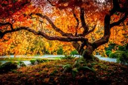 Inspiration, Portland Japanese Gardens - Steve Rutherford Landscape Photography Art Gallery