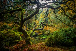 Twisted Beauty, Japanese Gardens Portland - Steve Rutherford Landscape Photography Gallery